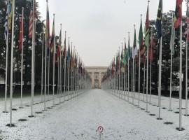 نظرة عامة على مشاركة منظمة أمريكيون من أجل الديمقراطية و حقوق الإنسان في البحرين في الدورة ٣١ لمجلس الأمم المتحدة لحقوق الإنسان